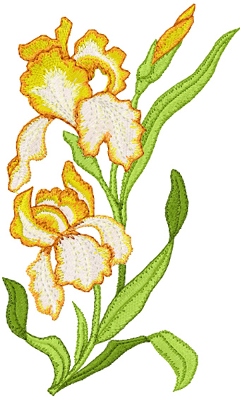 Fabulous Orchids Embroidery Designs Free 340 x 565 · 118 kB · jpeg